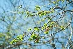 Spring mood. Fresh blue background with green young leaves for the holidays stock photography