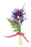 Spring Iris Royalty Free Stock Images
