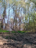 Spring on the islands. Verdant forest on the river in early spring. The trees rustle green and blue skies royalty free stock image