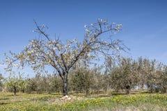 Spring in Istria Stock Image