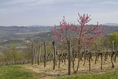 Spring in Istria. Landscape in the inland royalty free stock photos
