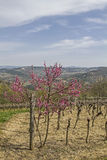 Spring in Istria. Landscape in the inland royalty free stock image