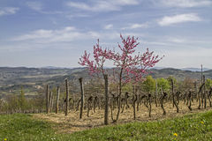 Spring in Istria. Landscape in the inland stock images