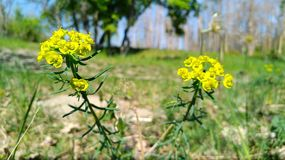 Spring and its best with yellow flower stock photography
