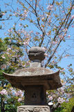 Spring in Japan Stock Photography