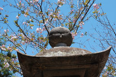 Spring in Japan Royalty Free Stock Image