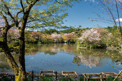 Spring in Japan stock image