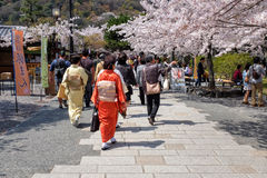 Spring in Japan Royalty Free Stock Images