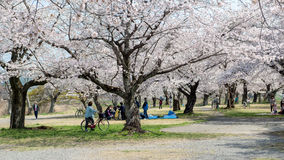 Spring in Japan Royalty Free Stock Photography