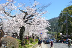 Spring in Japan. Sakura and sky in spring Royalty Free Stock Images