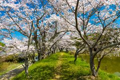 Spring in Japan Stock Photos
