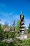 Spring in japanese garden. Pagoda and sakura blossom Stock Photography