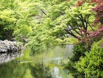 Spring In Japanese Garden Stock Photo