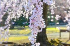 Spring in japanise park stock image