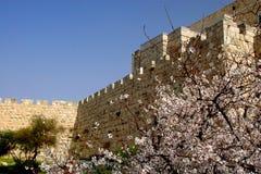Spring in Jerusalem. Jerusalem old city exterior wall on spring Royalty Free Stock Photography