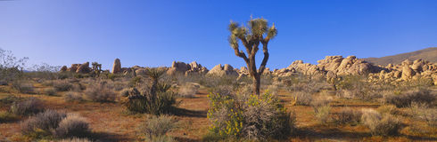 Spring in Joshua Tree National Park, Stock Photography