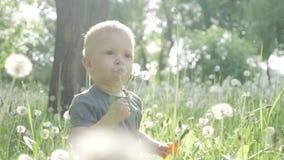Spring joy - little boy blowing dandelion. Spring joy - little boy blowing dandelion stock video footage