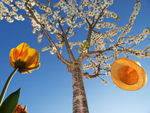 Spring-Jubilee. A blooming tulip in front of a blooming cherry tree and a sun-hat, which is thrown in the air to celebrate the spring Royalty Free Stock Images