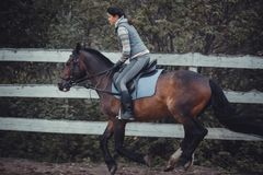Spring jump horse ride jumping Stock Photo