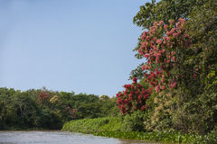 Spring on Jungle Riverbank Stock Photos