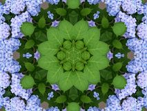 Spring kaleidoscope. Beautiful hydrangeas kaleidoscope . Background for your summer or spring projects royalty free stock images