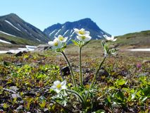 Spring on Kamchatka Royalty Free Stock Photography