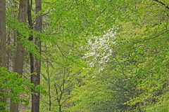 Spring, Kellogg Forest Stock Photography