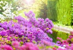 Spring in Keukenhof Royalty Free Stock Images