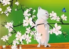 Spring kitten, Stock Photos