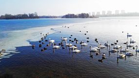 Winter lake with a spring smile royalty free stock photo