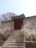 Spring in Korea Royalty Free Stock Image