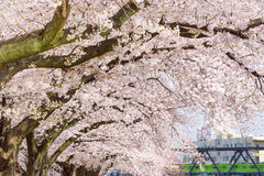 Spring in Kyoto Royalty Free Stock Images