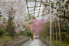 Spring in Kyoto, Japan Stock Photos