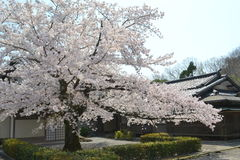 Spring in Kyoto, Japan Stock Photography