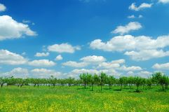 Free Spring Ladscape Royalty Free Stock Photos - 2131688