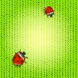 Spring ladybirds Stock Image
