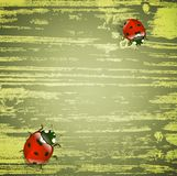 Spring ladybirds. Abstract light green wooden background with ladybirds, copyspace