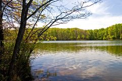Spring at the Lake. Early spring green on a country lake in Maryland Royalty Free Stock Photo