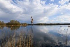 Spring lake. Royalty Free Stock Images