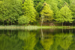 Spring lake landscape Royalty Free Stock Image