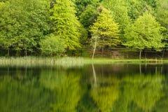 Spring Lake Landscape Royalty Free Stock Image