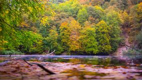 Spring lake in the woods. stock photos