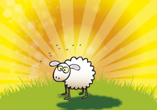 Spring Lamb. A hand drawn illustration of a single spring lamb set against a sunset Royalty Free Stock Images
