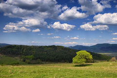 Spring landscape. A tree on a hill Stock Image
