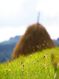 Spring landscape. Some threads of grass in the mountains apunseni photographed during camp photo Stock Image