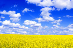 Spring landscape. Picture of oilseed rape on field and blue sky Stock Photography