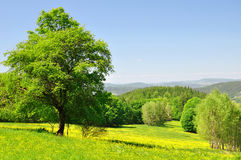 Spring landscape Royalty Free Stock Images