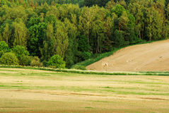 Spring landscape. View of spring landscape in late afternoon Stock Photos