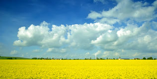 Spring landscape. Panorama spring landscape with yellow rape field Stock Image