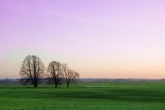 Spring landscape. Sunrise over green meadows in spring Royalty Free Stock Photos